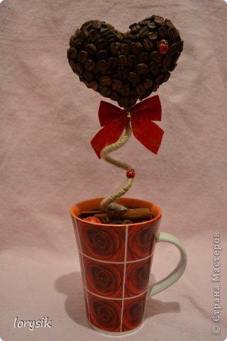 Мои кофейные деревья! фото 1
