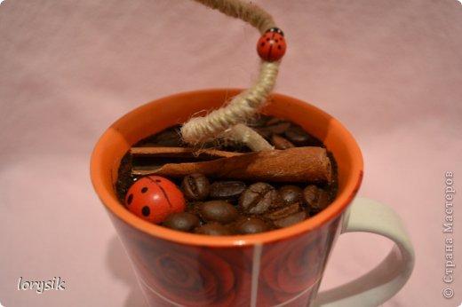 Мои кофейные деревья! фото 2