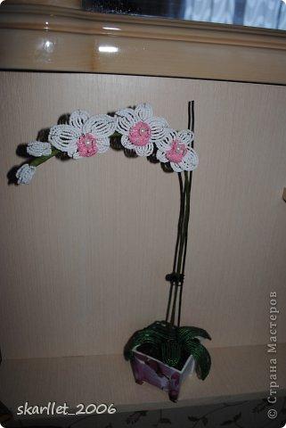 """Первая орхидея.  На фото еще без """"земли"""". Горшочек задекупажила """"фиолетовой орхидеей"""" фото 2"""