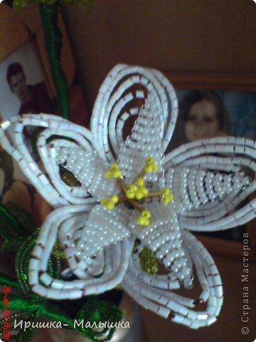 Понравилась мне техника плетения этих непонятных- чудо цветочков- решила продолжить... Жаль, что вазочки подходящей не было- пришлось чуток изменить пивную банку.... фото 4