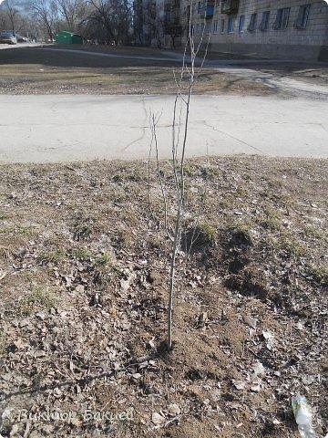 Вот и пришла на конец-то весна.  фото 10