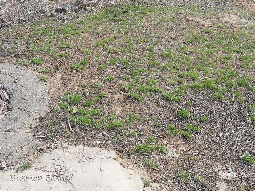Вот и пришла на конец-то весна.  фото 3