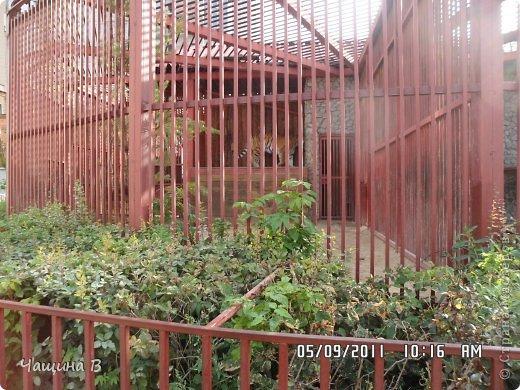 Моя сестра Карина ездила в Екатеринбург - зоопарк. Вот несколько животных.  фото 14