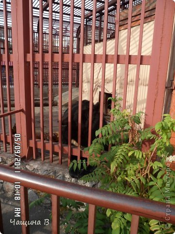 Моя сестра Карина ездила в Екатеринбург - зоопарк. Вот несколько животных.  фото 15