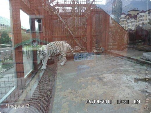Моя сестра Карина ездила в Екатеринбург - зоопарк. Вот несколько животных.  фото 4