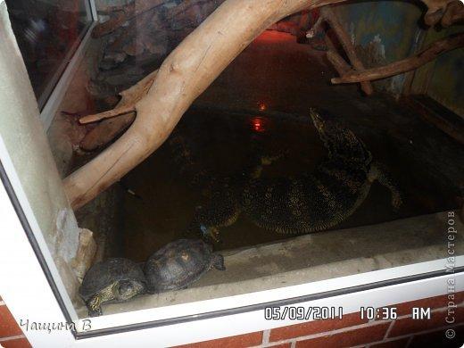 Моя сестра Карина ездила в Екатеринбург - зоопарк. Вот несколько животных.  фото 7