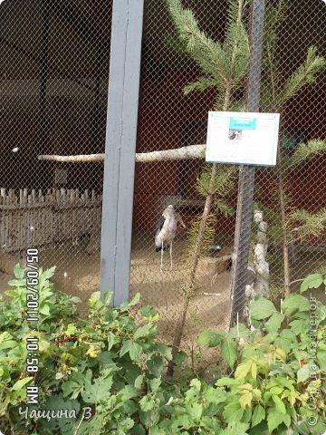 Моя сестра Карина ездила в Екатеринбург - зоопарк. Вот несколько животных.  фото 11