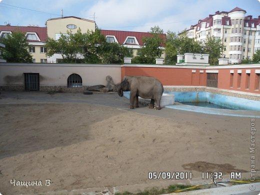 Моя сестра Карина ездила в Екатеринбург - зоопарк. Вот несколько животных.  фото 12