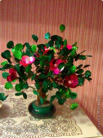 Роза  фото 4
