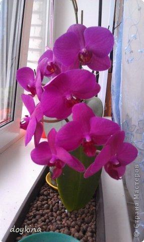 Орхидеи фото своими руками