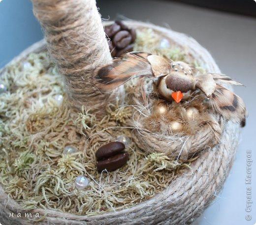 Здравствуйте, дорогие мои! У меня сегодня кофейное дерево и история... фото 1