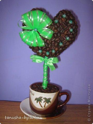 Мои кофейные деревья фото 1