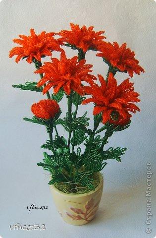 хризантемы Бисер фото 2.