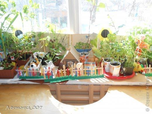 как и обещала (вспомнила в самый последний момент) выставляю фотографии наших огородов. этот огород появился в старшей группе. детям предлагалось принести из дома любые семена и посадить. в каждую баночки вставляли палочку с фамилией ребенка, что посеял и когда. лучок дети сажали в группе с воспитателями. фото 5