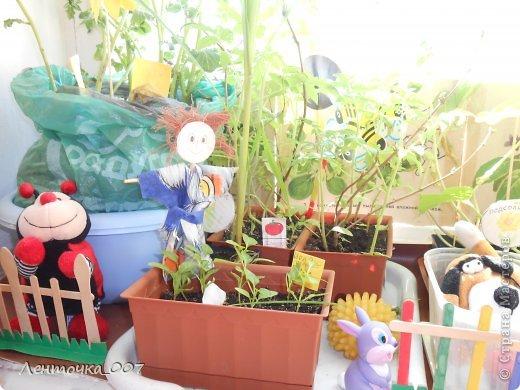 как и обещала (вспомнила в самый последний момент) выставляю фотографии наших огородов. этот огород появился в старшей группе. детям предлагалось принести из дома любые семена и посадить. в каждую баночки вставляли палочку с фамилией ребенка, что посеял и когда. лучок дети сажали в группе с воспитателями. фото 6