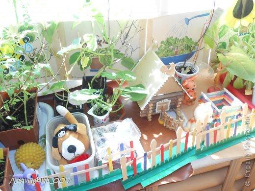 как и обещала (вспомнила в самый последний момент) выставляю фотографии наших огородов. этот огород появился в старшей группе. детям предлагалось принести из дома любые семена и посадить. в каждую баночки вставляли палочку с фамилией ребенка, что посеял и когда. лучок дети сажали в группе с воспитателями. фото 7