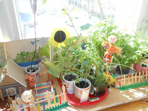 как и обещала (вспомнила в самый последний момент) выставляю фотографии наших огородов. этот огород появился в старшей группе. детям предлагалось принести из дома любые семена и посадить. в каждую баночки вставляли палочку с фамилией ребенка, что посеял и когда. лучок дети сажали в группе с воспитателями. фото 8