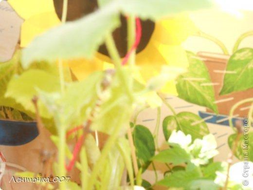 как и обещала (вспомнила в самый последний момент) выставляю фотографии наших огородов. этот огород появился в старшей группе. детям предлагалось принести из дома любые семена и посадить. в каждую баночки вставляли палочку с фамилией ребенка, что посеял и когда. лучок дети сажали в группе с воспитателями. фото 11