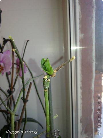 С нее все началось,  первый цветок подарили в 2010 году, это была любовь с первого взгляда! фото 20