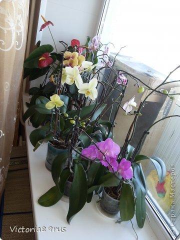С нее все началось,  первый цветок подарили в 2010 году, это была любовь с первого взгляда! фото 18