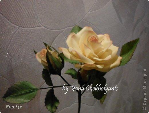 Это вот моя роза