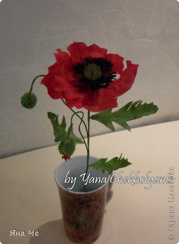 Это вот моя роза фото 2