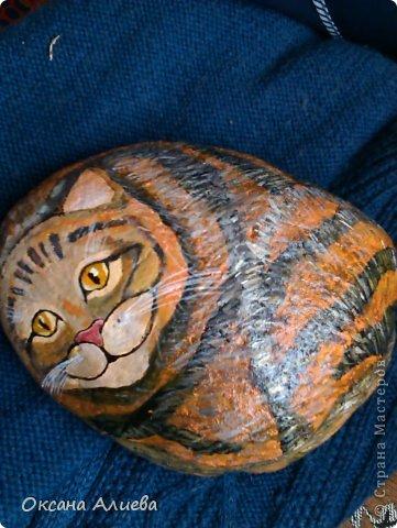 котик-первый опыт на камне