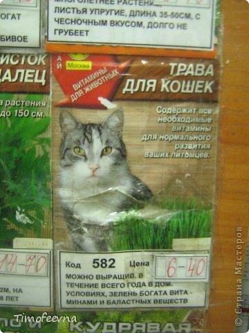 """Привет всем гостям моей странички и особенно любителям кошек!  Да, я обожаю кошек, но сама котика завела всего полгода назад, взяли его по объявлению и назвали его Антоша. Как и у любых котов, у нашего Антошки есть свои особенные черты характера. Одна из них странновата для кота, он у нас почти вегетерианец :) мясо не ест, рыбу редко, но вот если учует запах рагу, вареной моркови или моей любимой стручковой фасоли, то весь на """"мяв"""" изойдется, вилку будет на лету из рук выбивать, лишь бы ему тоже в тарелочку наложили.  Вот так его и подкармливаем овощами, а недавно решили с ребятишками ещё и травку для него вырастить, специальную, кошачью. Подумали, что и полезно ему будет и приятно котику сделаем. и не прогадали. фото 3"""