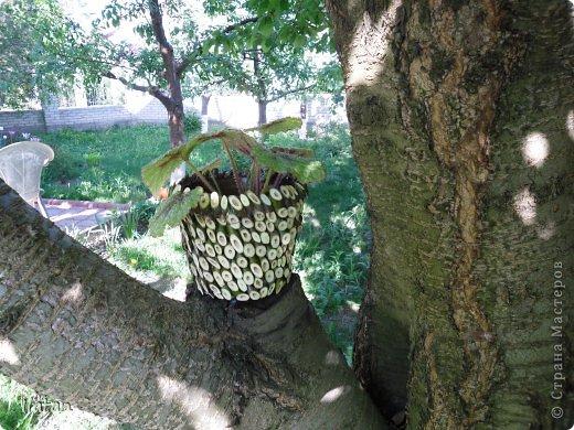"""Добрый день или вечер мои хорошие давние знакомые и не знакомые :) подружки и друзья нашей прекрасной Страны Мастеров!!!!  Многие из Вас знают как я люблю цветы....а для них естественно нужны """"одежки"""", ну в смысле горшочки..... Весна, обрезка деревьев, натолкнули меня на создание сего чуда.... Обычные пластмасовый горшок, термопистолет, срезы  веточек час свободного времени и вуаля....очередная красота в моем арсенале! Смотрите.....  фото 3"""
