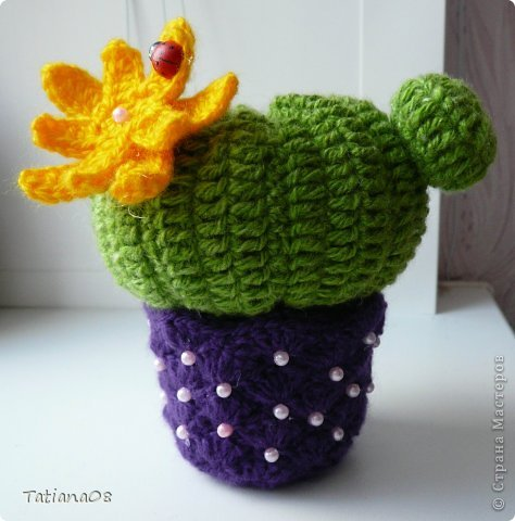 Мой цветущий кактус