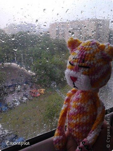 А еще все коты Аминеко безумно любят смотреть в окно.  Вот и я все смотрю на ливень.  Ну вот и все)...
