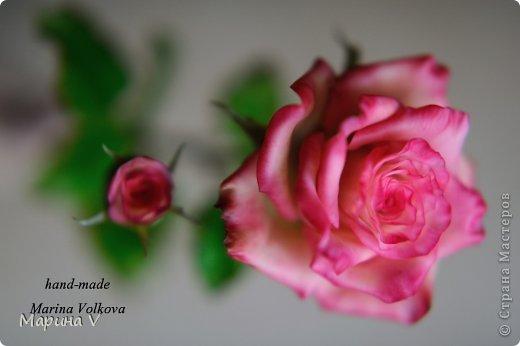 Мои эксперименты продолжаются... На этот раз с цветом)) Но все равно, фотоаппарат не передает истинного цвета розы, а очень жаль... Глина самая обычная ТайКлэй, масло, высота 50см.