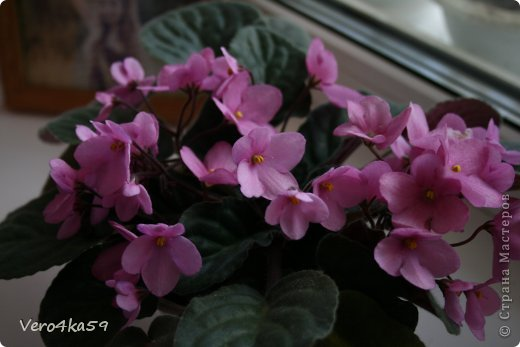Цветут мои цветочки. фото 1