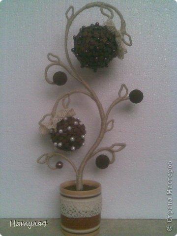 Топиарии из кофейных зерен своими руками фото