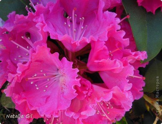 Мне нравятся сорта фиолетовой расцветки фото 3