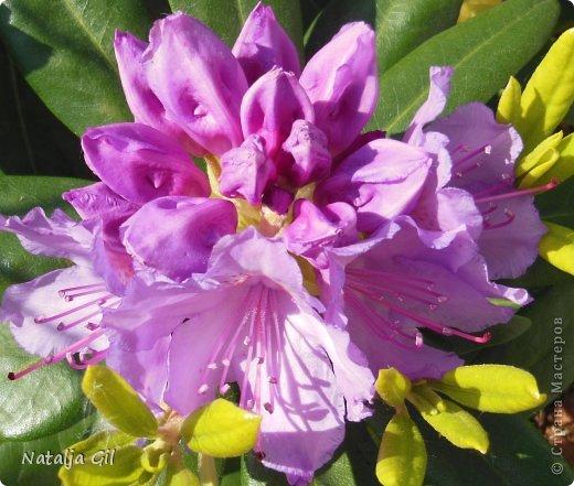 Мне нравятся сорта фиолетовой расцветки фото 4