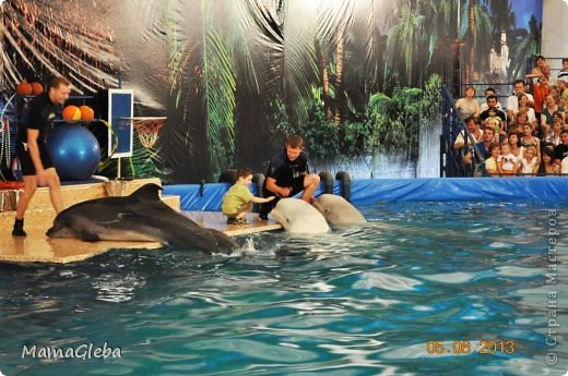 Побывали мы с Глебом в Дельфинарии! Глеб даже в шоу поучаствовал. Мы не могли не сделать поделку с дельфинчиками. При чём, делая эту картинку, сын проявил фантазию, он предложил сделать дельфина разноцветным (хотя я предлагала только синий цвет), а ещё он сказал , что нужно сделать чёрную полоску на теле дельфина, как на рисунке. фото 2