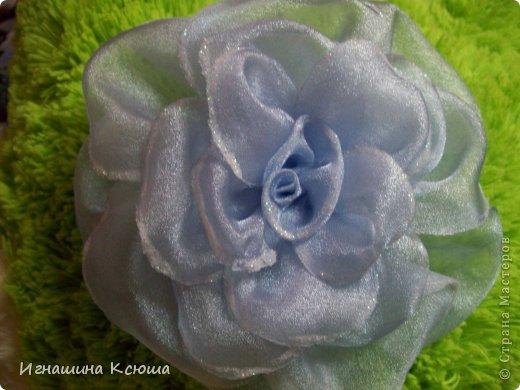 этот цветок расцвёл на шляпке у дочери фото 5