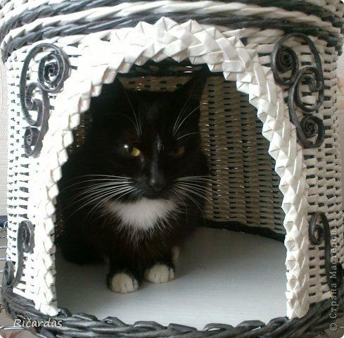 Привет всем!!! Попросила знакомая сплести домик для кошки. А так как у неё интерьер белый с черными элементами, а кошка черная с белым, домик тоже должен быть белый с черными элементами... Ну, вот, что получилось. Хозяйке домик оооочень понравился, не знаю, как понравится для жительницы этого домика... Отдельное спасибо, Ильфату!!! Без украшенй этих, домик был бы скучноватым, думаю... И так-черные трубочки из газеты, покрашены черным колером, белые трубочки из бумаги, похожую на кассовую ленту, она очень тонкая, полоски для трубочек пришлось делать широкие-10 см, когда обычно из газеты делаю 6-7 см... фото 6