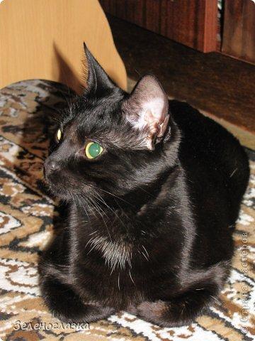 Живет у нас кот, зовут его Макс, сейчас ему чуть больше года