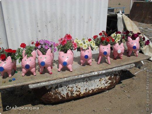 sdc11734 Как сделать свинью из пластиковой. Смешные поросята из пластиковых бутылок