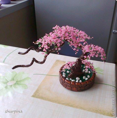 Сакура фото 9