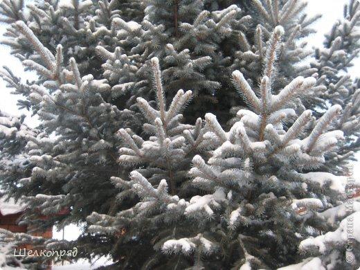 Зима была очень долгая, но очень красивая. фото 40