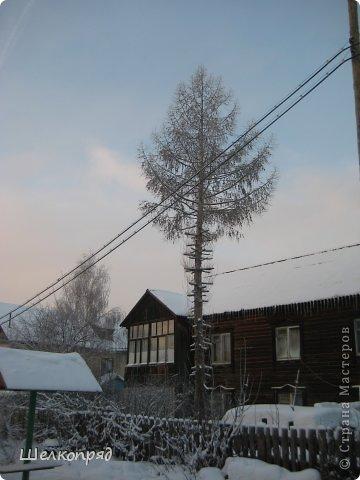 Зима была очень долгая, но очень красивая. фото 30