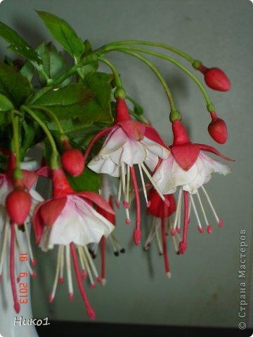 Дорогие мастерицы СМ! Захотелось сделать этот красивый цветок, который растет у меня на подоконнике, но никак не хочет цвести... Очень мне нравится фуксия - она как балеринка в пышной юбочке  на длинной ножке! Посмотрела в Интернете фото фуксий, оказалось, что их разновидностей великое множество...  фото 4
