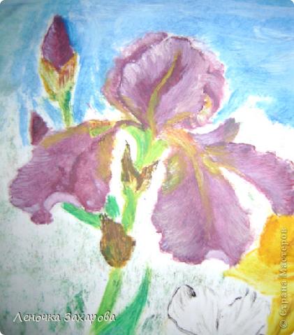 первые 10 фото - рисунки роз,далее 9 рисунков разных цветочков,11 рисунков животных и 13 разных рисунков. Качество может быть плохое из-за уменьшения размера фото. фото 15