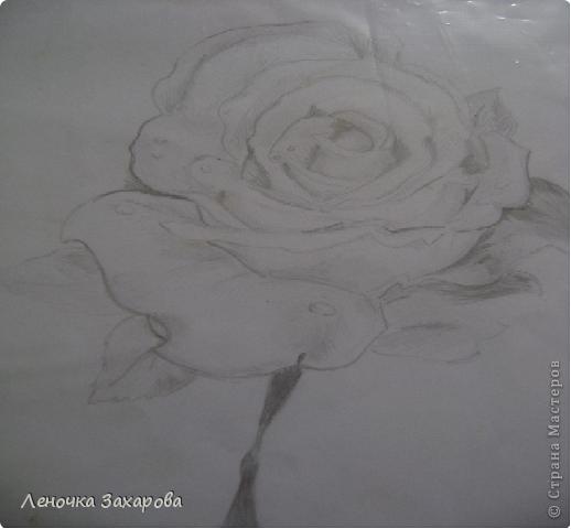 первые 10 фото - рисунки роз,далее 9 рисунков разных цветочков,11 рисунков животных и 13 разных рисунков. Качество может быть плохое из-за уменьшения размера фото. фото 3
