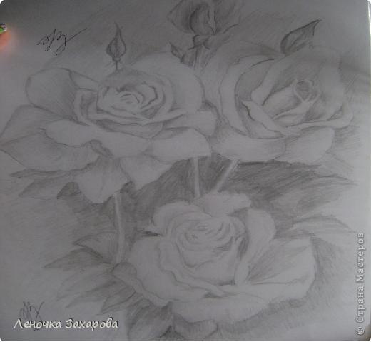 первые 10 фото - рисунки роз,далее 9 рисунков разных цветочков,11 рисунков животных и 13 разных рисунков. Качество может быть плохое из-за уменьшения размера фото. фото 1