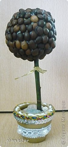 моё первое кофейное дерево