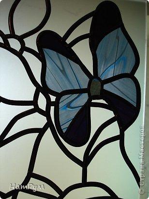 4_2 Бабочки в банке. Бабочки своими руками